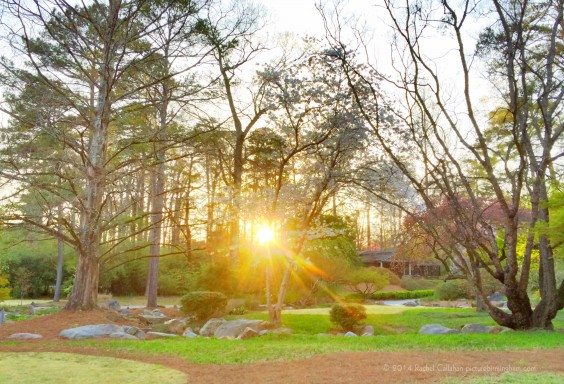 Sunset Peeking into the Japanese Gardens