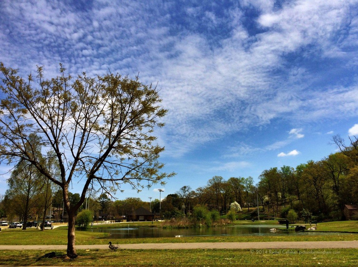 Cloud Watching at Avondale Park