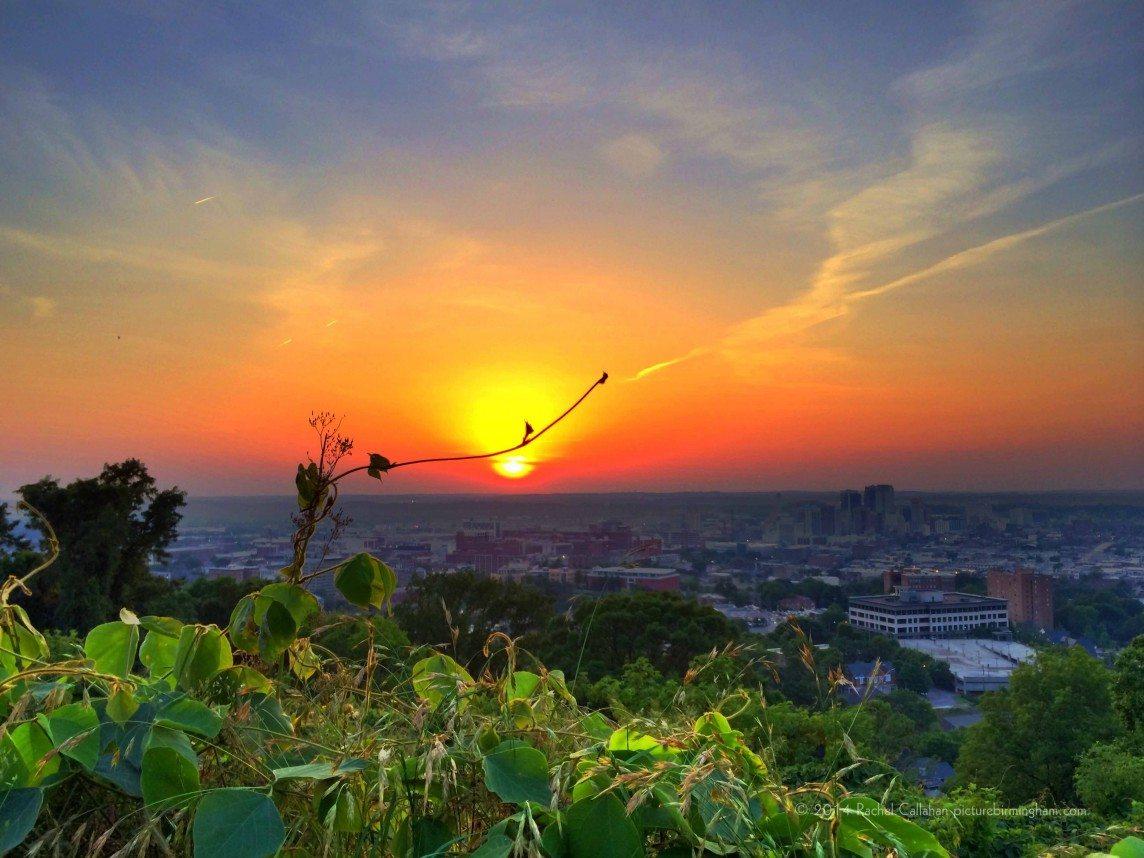 Watching The Sunset With the Kudzu