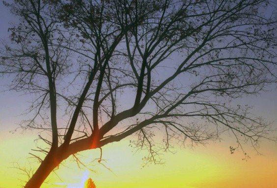 Resting Below the Tree