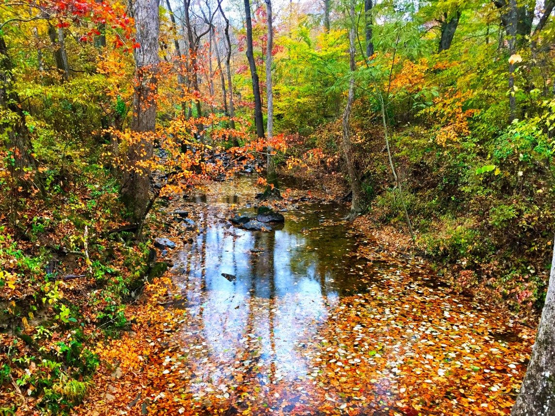 Kelly Creek and her Leaves