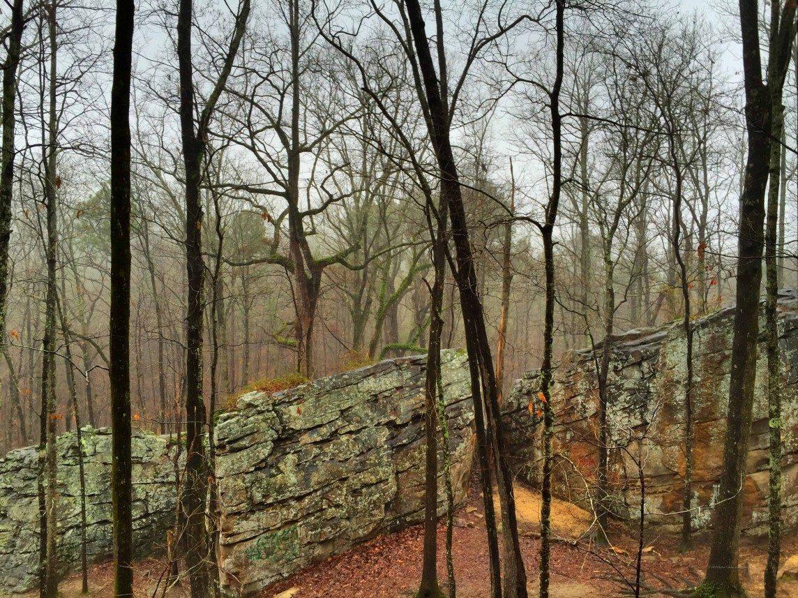Foggy Woods at Moss Rock Preserve