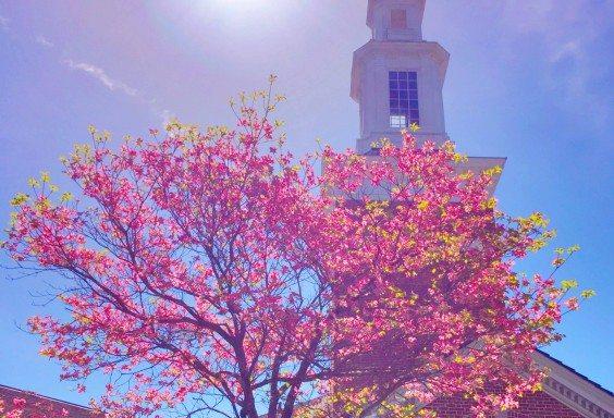 Spring Finds Mountain Brook Baptist