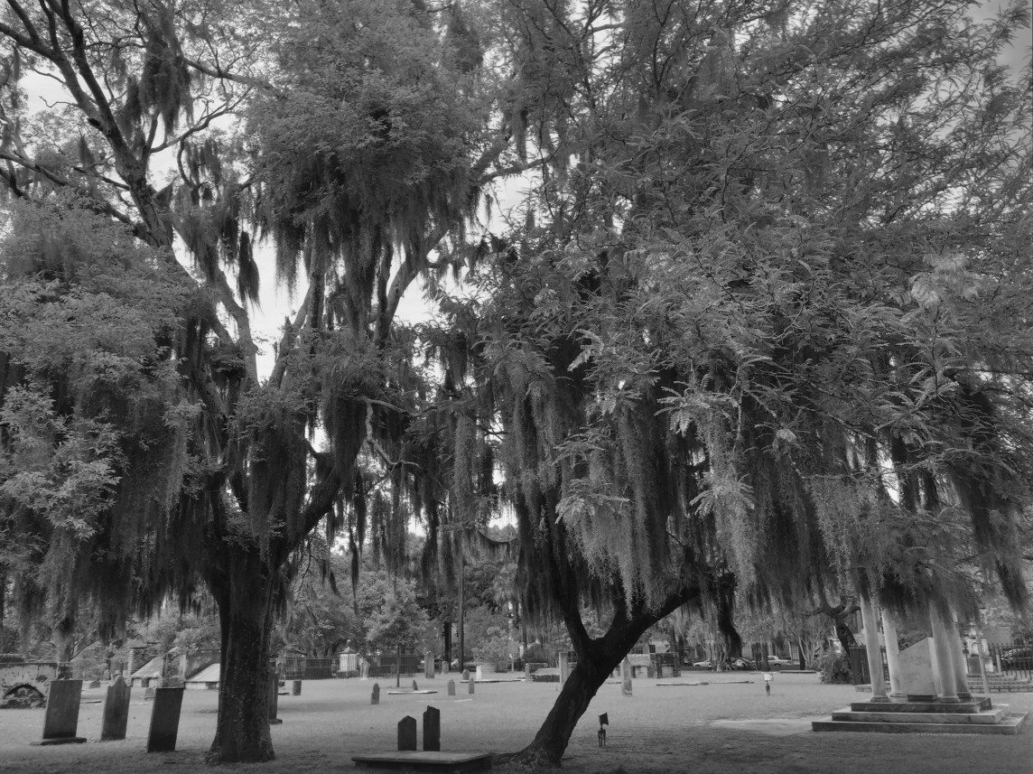 Live Oaks and Dead People
