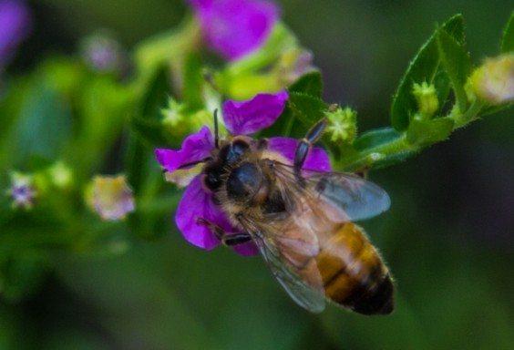 151030i-Smallest-Deserve-Pollination