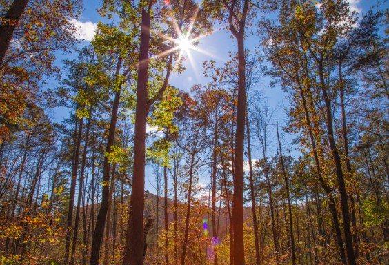 151110lALT-Guntersville-Hiking-Views