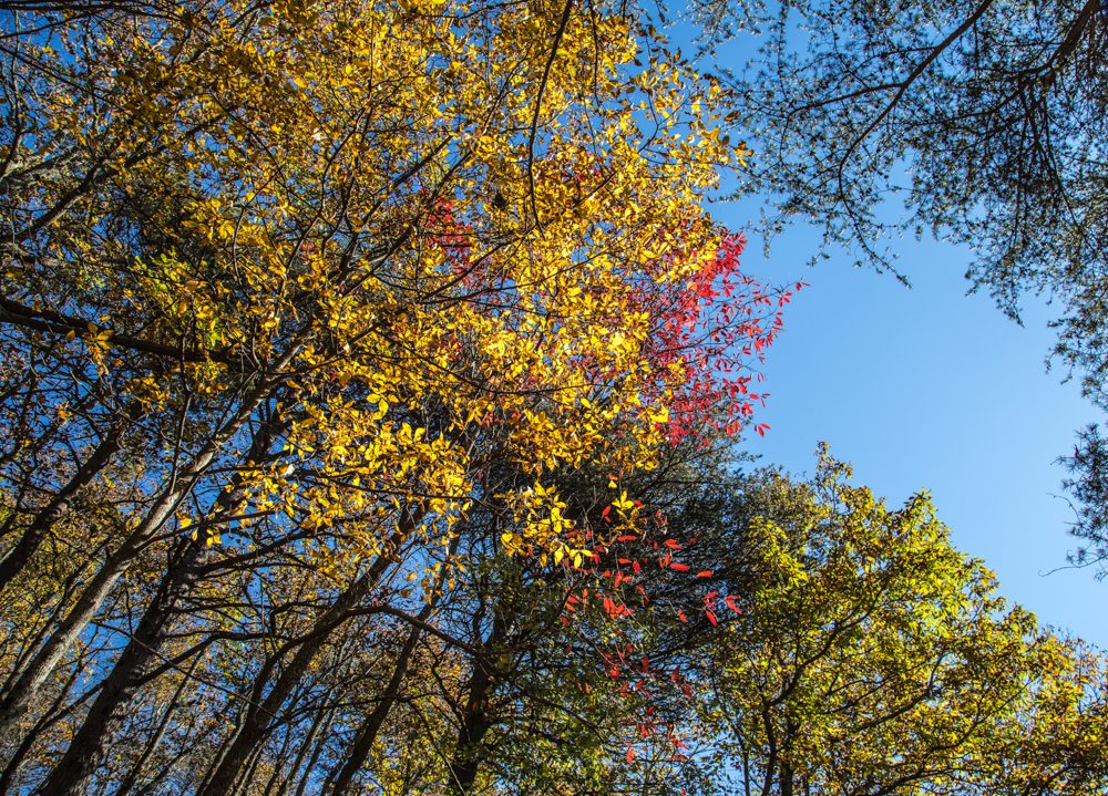 151111g-The-Treetops-at-Cheaha
