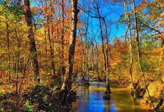 151120 Magical Creek