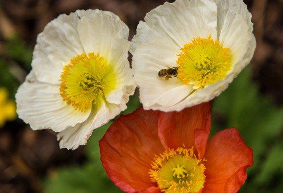 160311f-honey-season