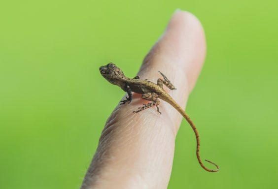 160918e-tiny-friend-lizard