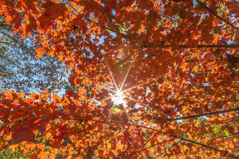 161029-fall-bursting-forth