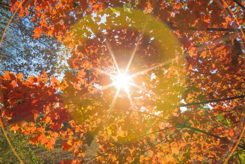 161029b-fall-bursting-forth