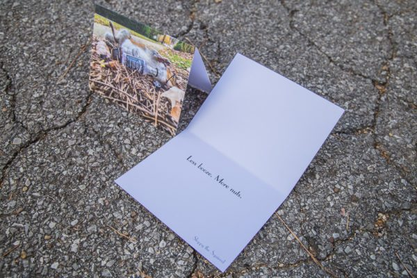 roadkill-notecards-sloppy-the-squirrel
