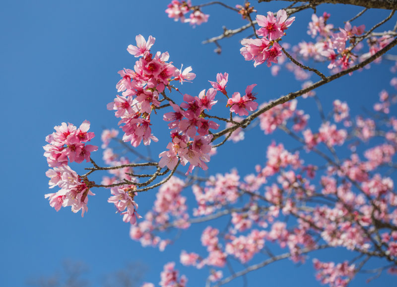 170219b-February-Blooms