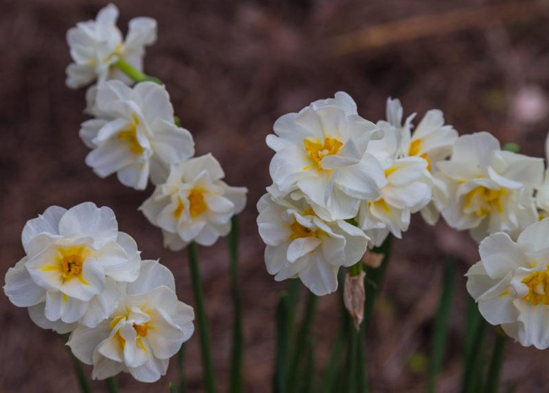 170322g-Botanical-Gardens