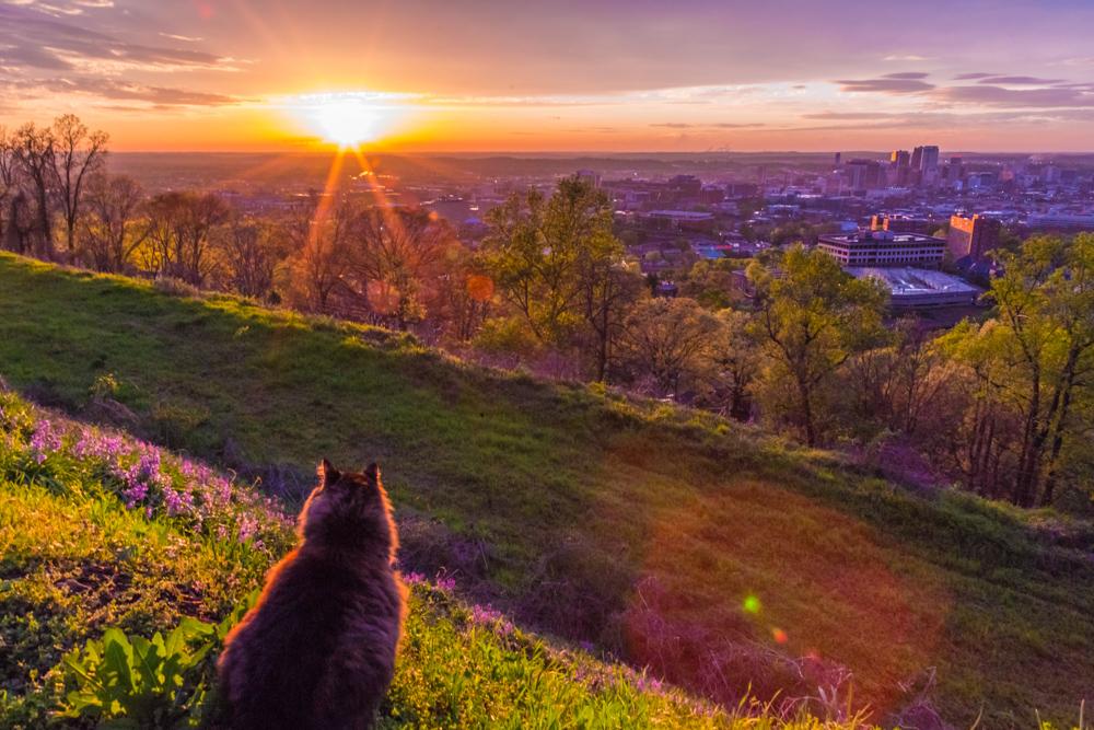 170330f-Sunset-Cat