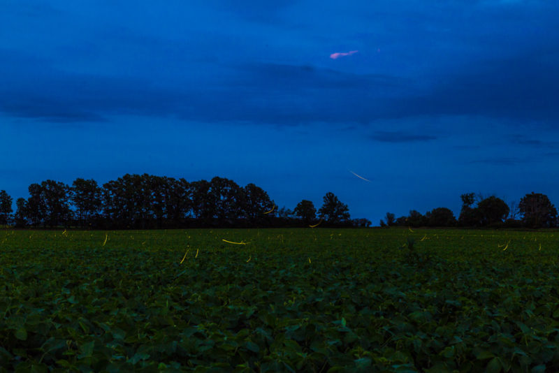 170701-Fireflies-in-Michigan s