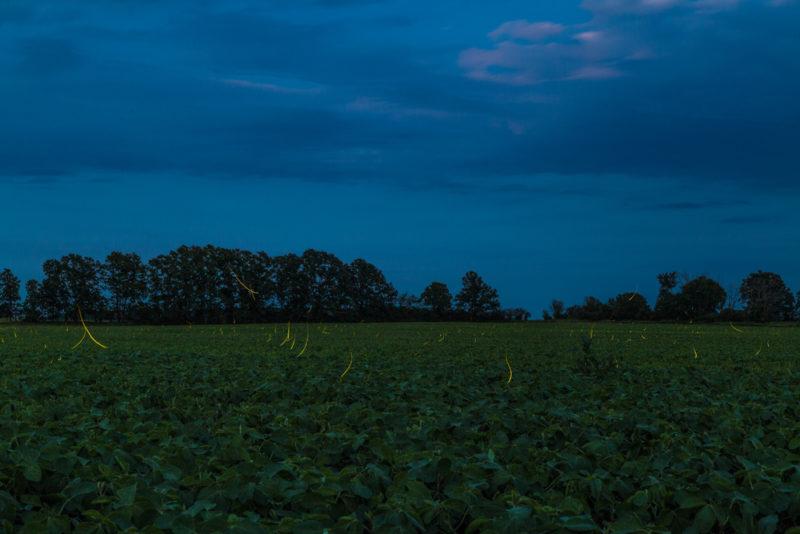 170701c-Fireflies-in-Michigan s