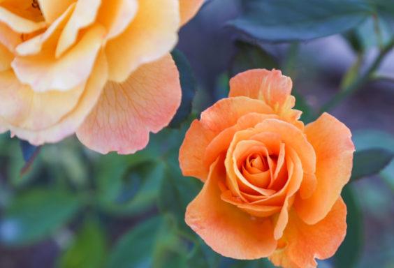 170901 Botanical Gardents in September IMG_9867 s