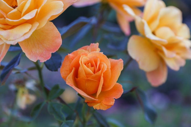 170901 Botanical Gardents in September IMG_9871 s