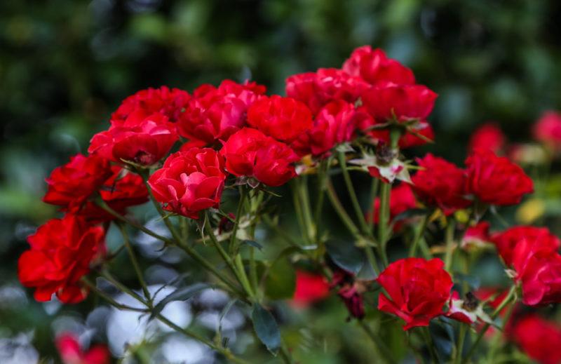 170901 Botanical Gardents in September IMG_9905 s