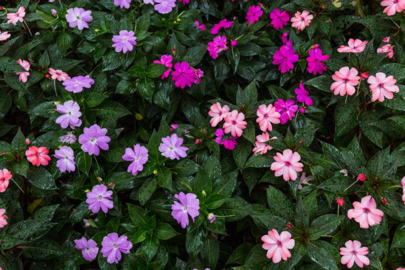 170919 Botanical Gardens IMG_2913