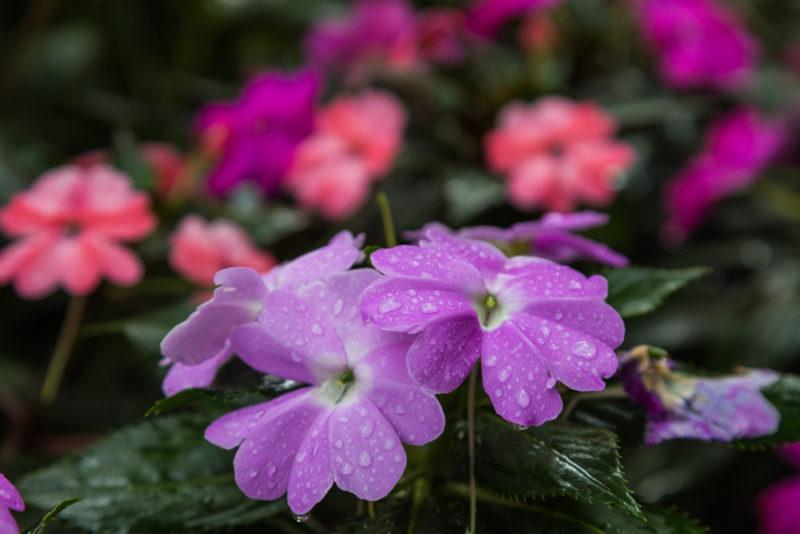 170919 Botanical Gardens IMG_2935