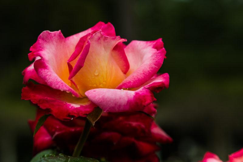 170919 Botanical Gardens IMG_2939