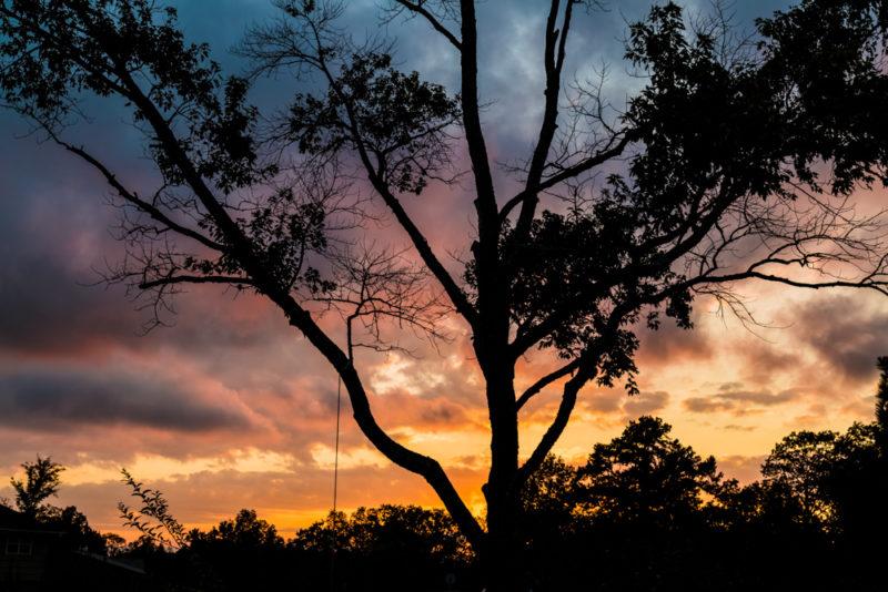 171102-Tree-Swing-Sunset