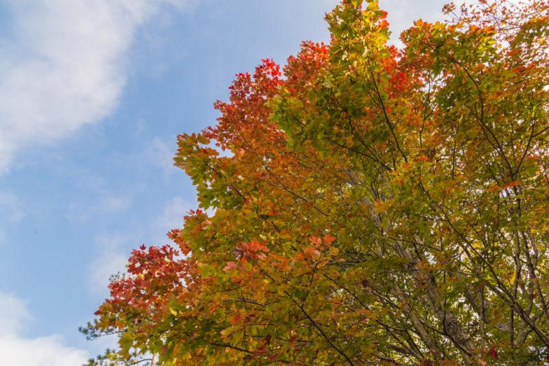 171103c November Leaves IMG_5568