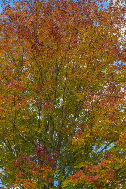 171103c November Leaves IMG_5595