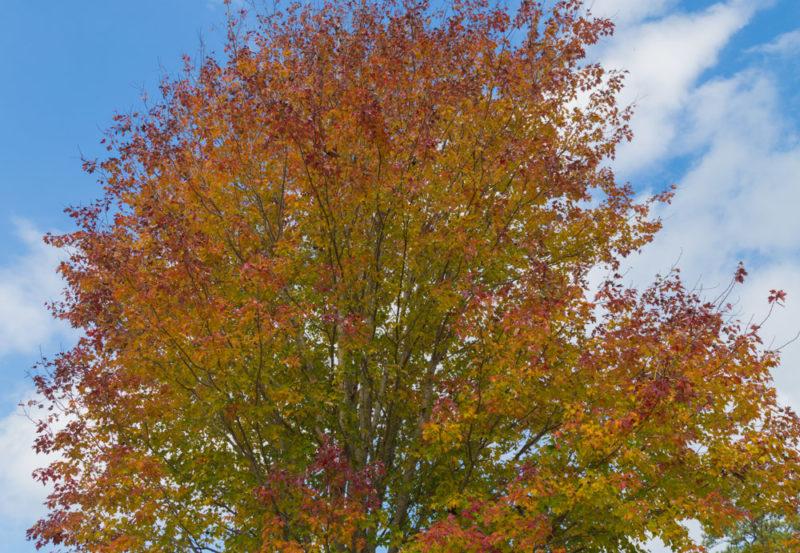 171103c November Leaves IMG_5601