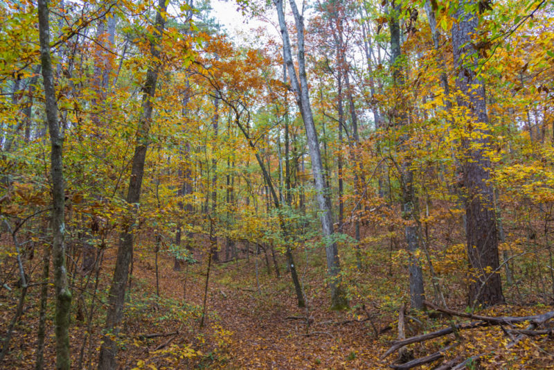 171107 Hiking at Oak Mountain in the Fall IMG_8986S