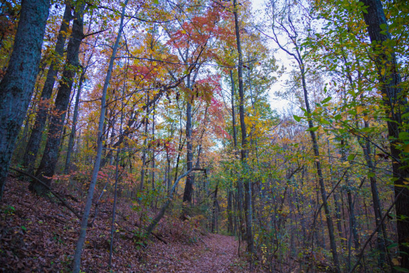 171120 Fall Forest in Ruffner Mountain IMG_2500 s