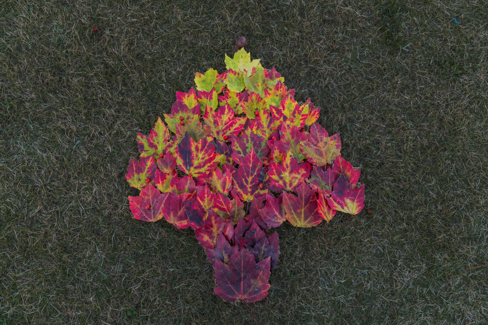 171122-Leaf-Christmas-TreeIMG_5438-v2 s