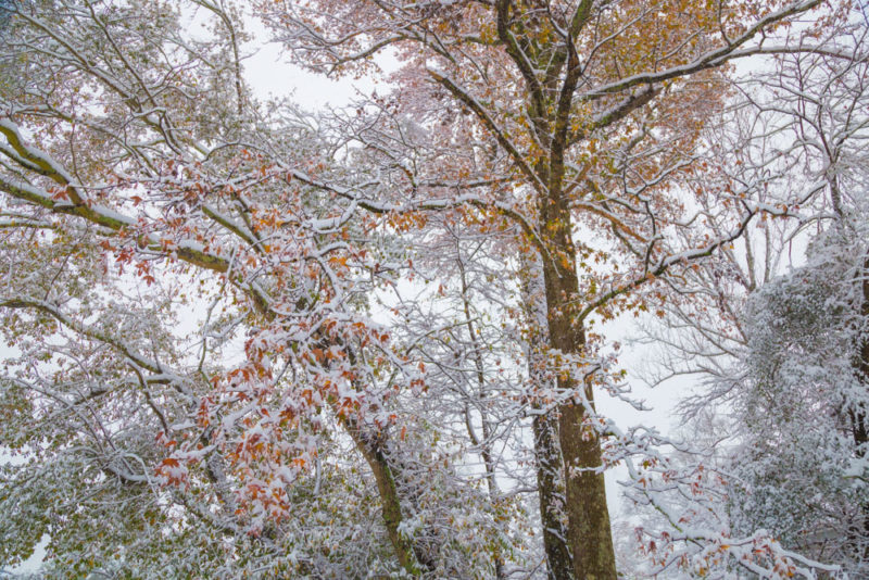171209 Fall Interrupted Snow Storm IMG_6891 s