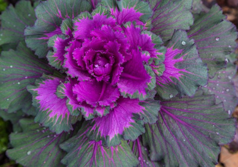 171218 Aldridge Gardens IMG_7544 s