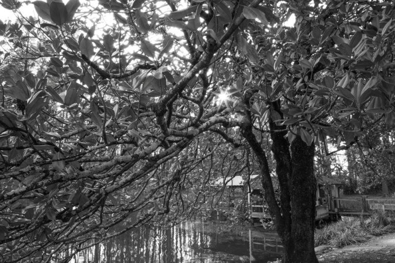 171218 Aldridge Gardens IMG_7705 s