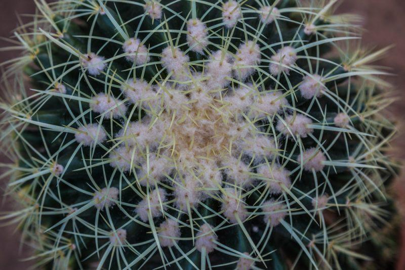 180306 Cactus at Botanical Gardens IMG_5698 s