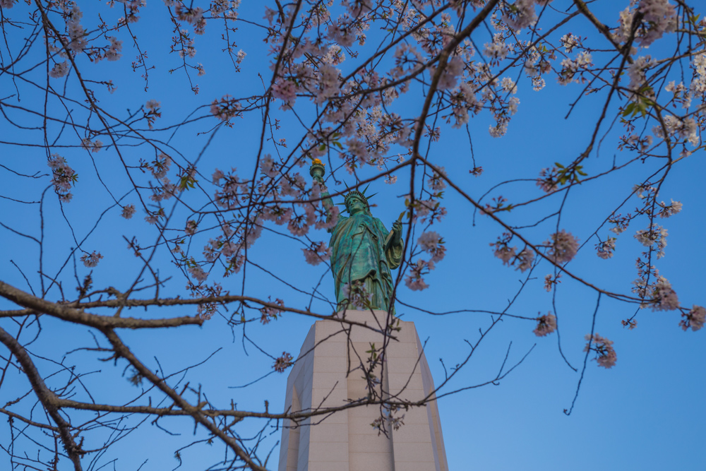 180315 Lady Liberty in Cherry Blossoms IMG_6637 s