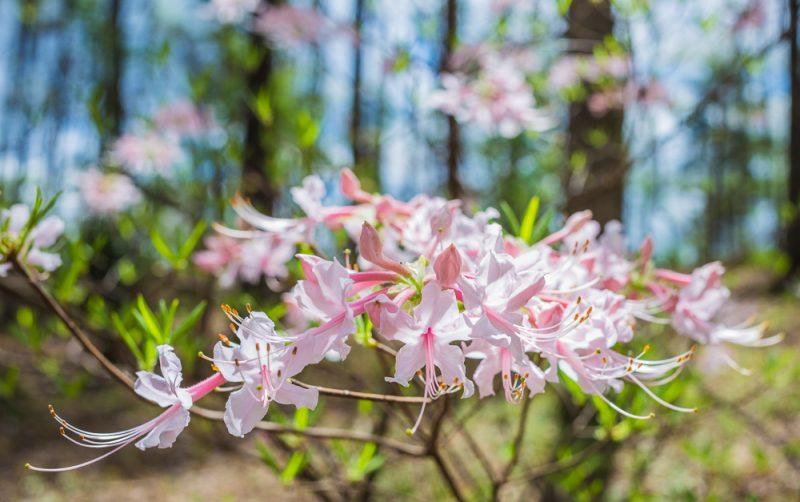180403 Aldridge Gardens IMG_9684 S