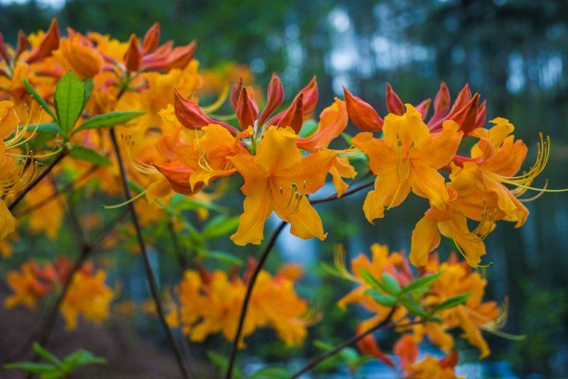 180403 Aldridge Gardens IMG_9738 S