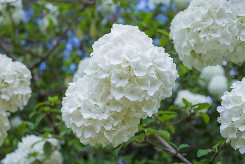 180403 Aldridge Gardens IMG_9743 S