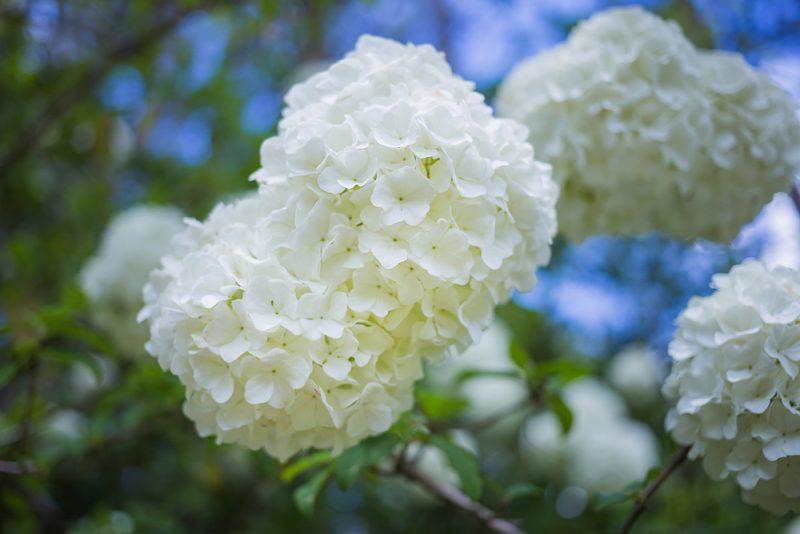 180403-Aldridge-Gardens-IMG_9750-EDIT S