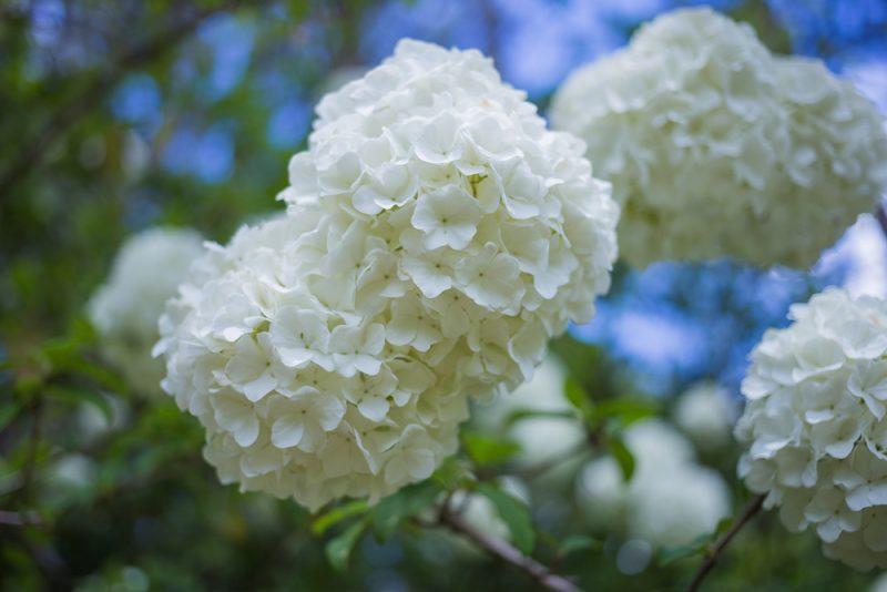 180403 Aldridge Gardens IMG_9750 S