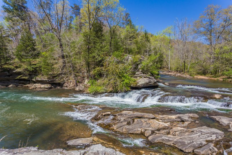 180404 Turkey Creek Nature Preserve IMG_9800 S