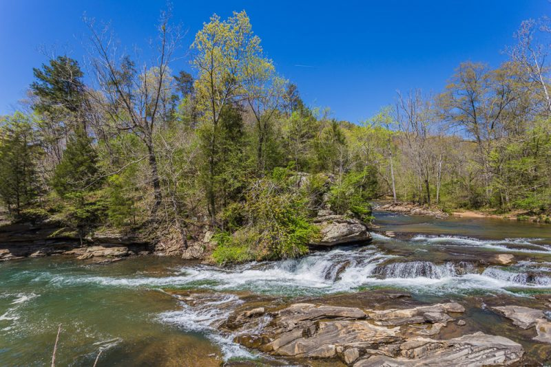 180404 Turkey Creek Nature Preserve IMG_9815 S