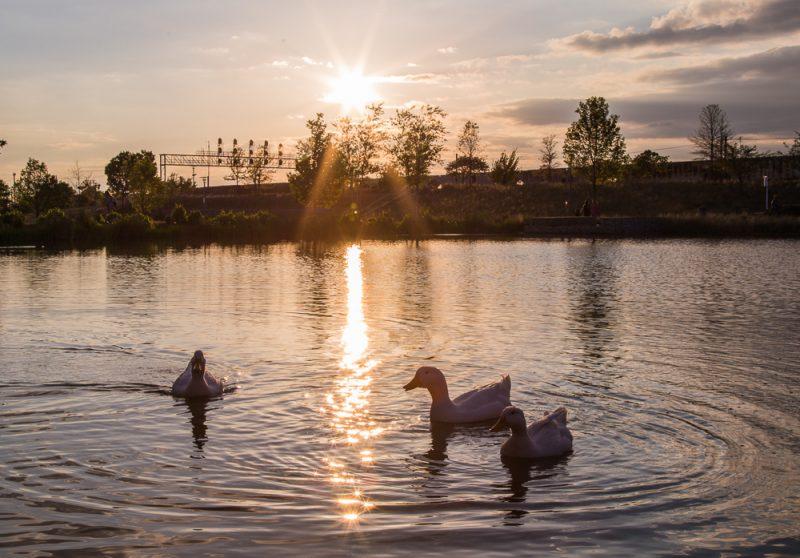 180423 Diva Ducks at Railroad Park IMG_1497 S