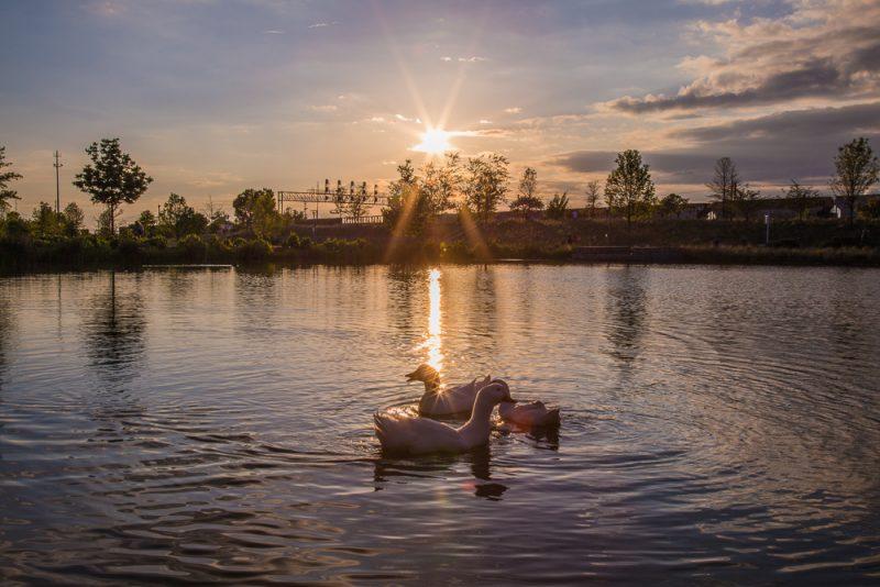 180423 Diva Ducks at Railroad Park IMG_1498 S