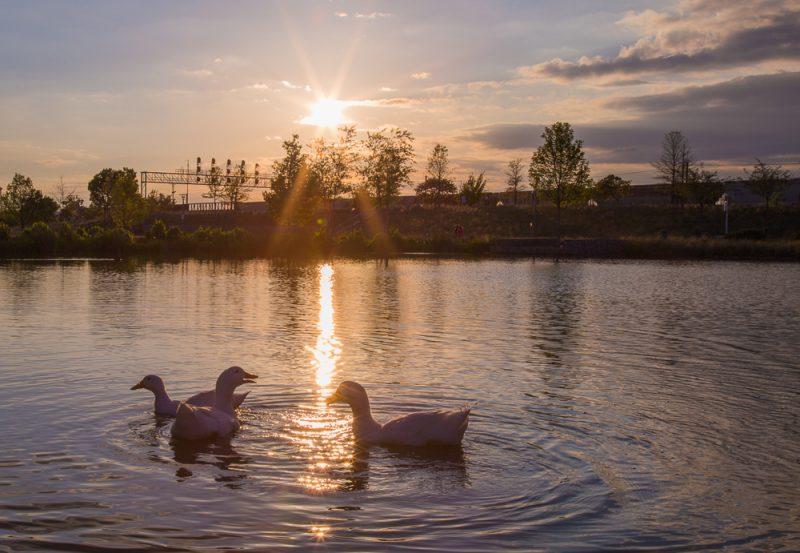 180423 Diva Ducks at Railroad Park IMG_1506 S